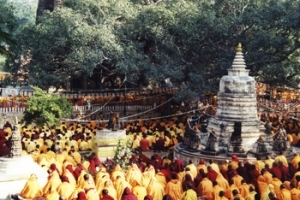 mahabodhi-monks-cc-jungle-boy